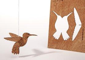 269 - kolibrie