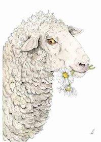 OTH031 - Daisy Sheep