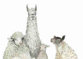 OTH004 - Playing Sheep