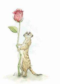 OTH011 - Meerkat' Lovin