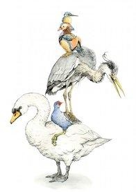 OTH045 - Birds-of-Blighty